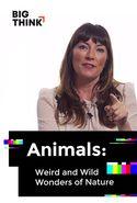 Animals: Weird and Wild Wonders of Nature