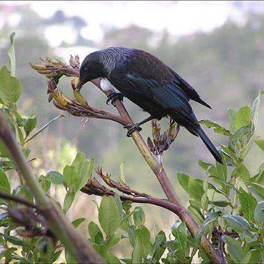 Kiwi Summer Birds